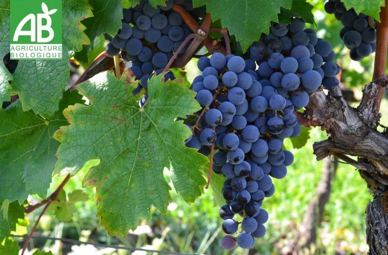 didier_goubet_jus_de_raisin_bio_cepage_agriculture_biologique